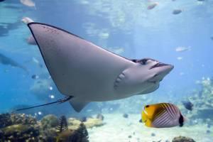 Reef photo 3