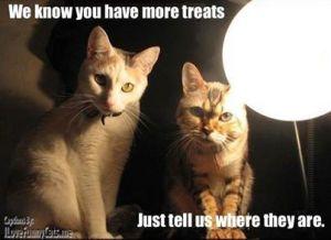 cat interegation