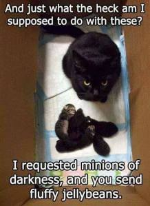 cats and their minions
