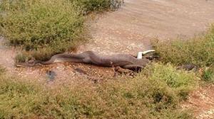 goodbye python