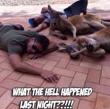 kangaroo piss up