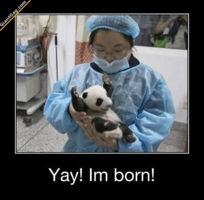 yay-im-born-panda