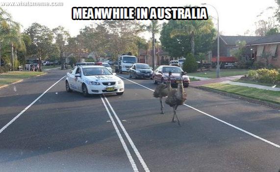 emus speeding