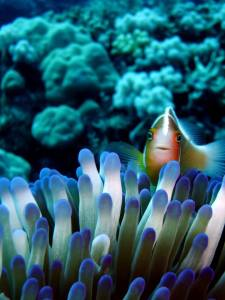 reef fish and plant life