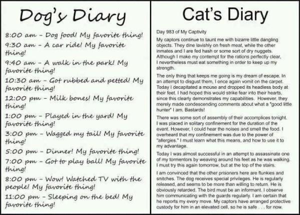 cat vs dog day