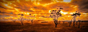 i_love_a_sunburnt_country_by_rick6100-d4rlgss