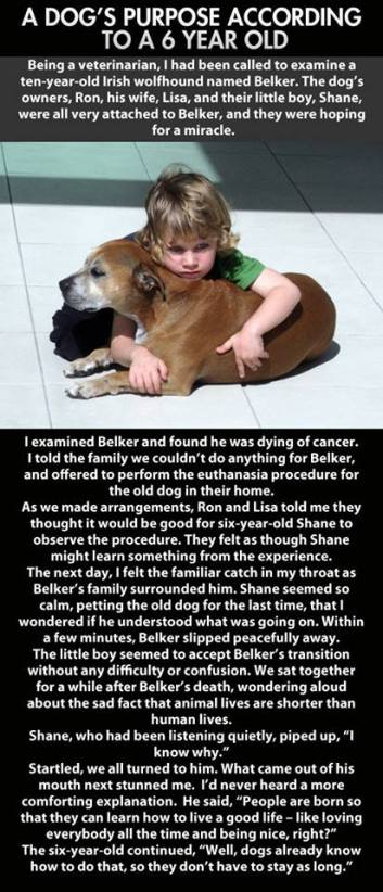 the purpose of a dog