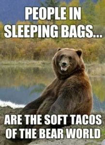 bears on camping