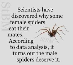 spiders eat their mates