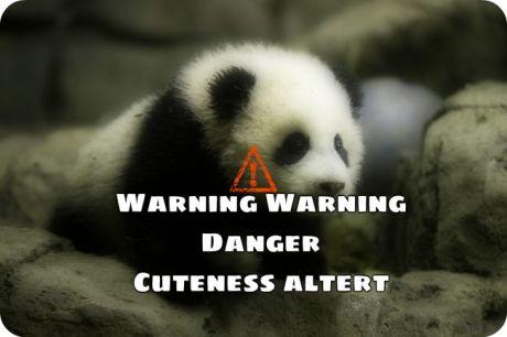 BeFunky_baby panda.jpg